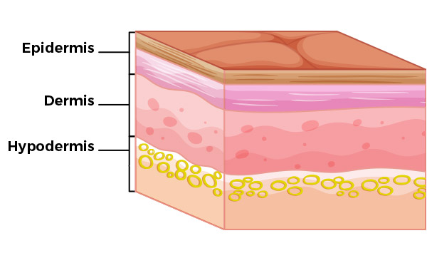 Layers of Skin